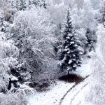 zimlag150